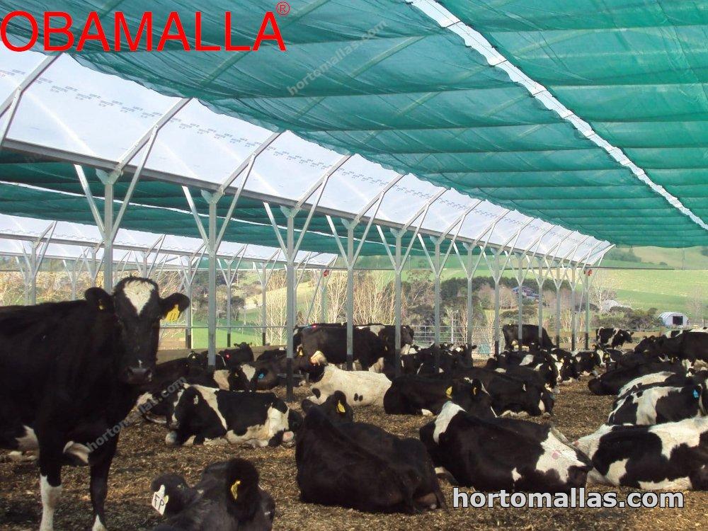 shade net providing protection to animals