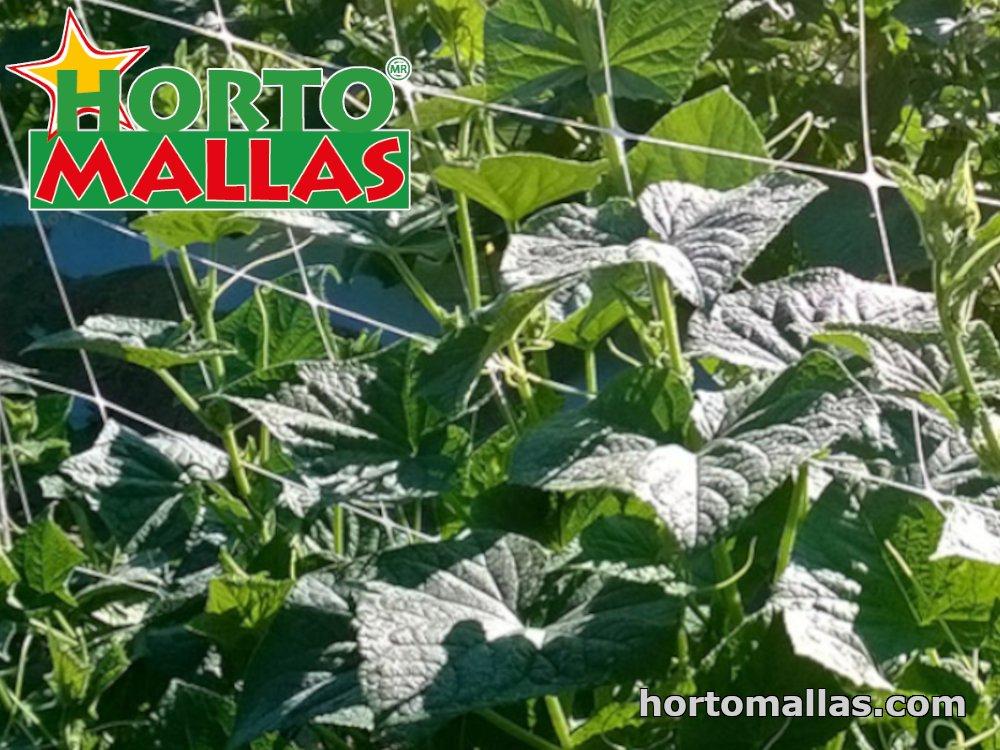 Pea netting by HORTOMALLAS