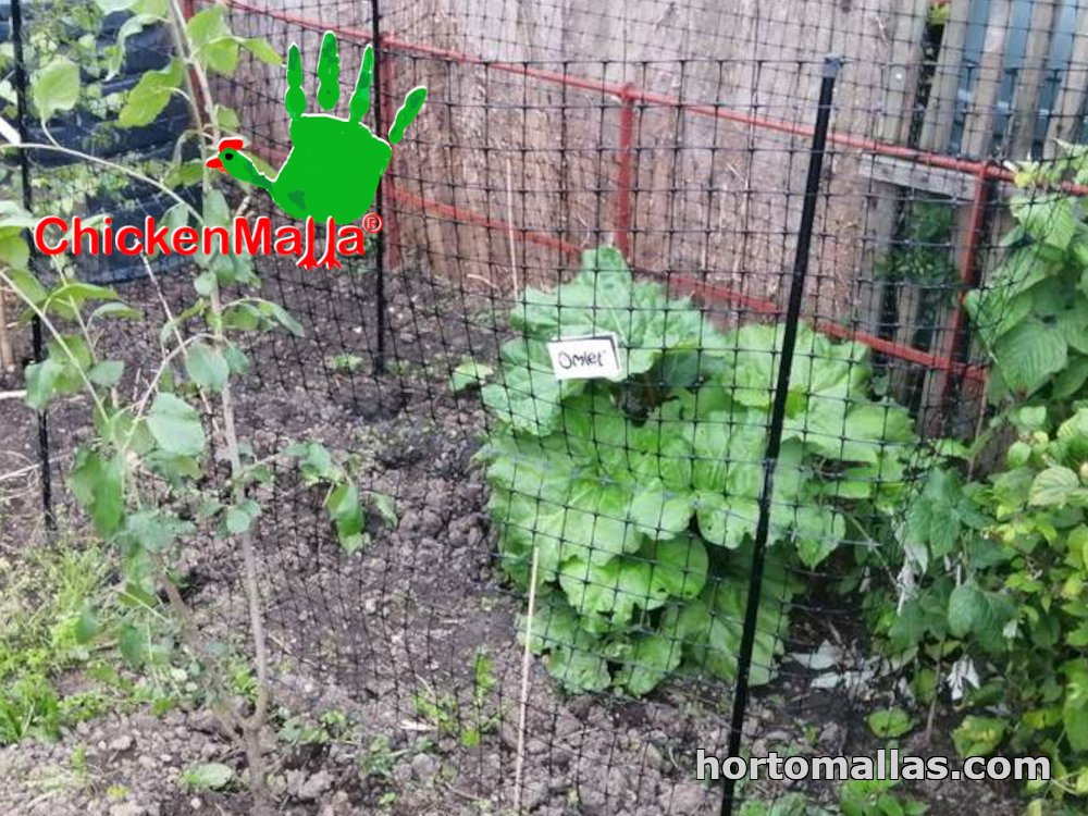 Netting for plants to protect fruit trees against birds