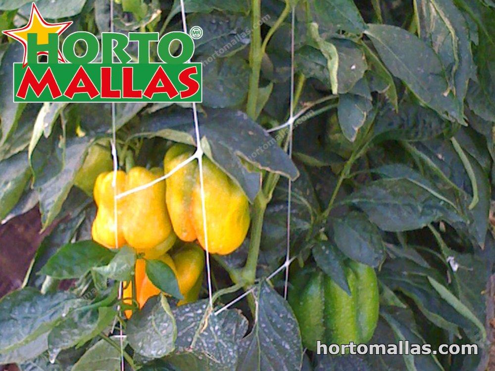 training pepper plants