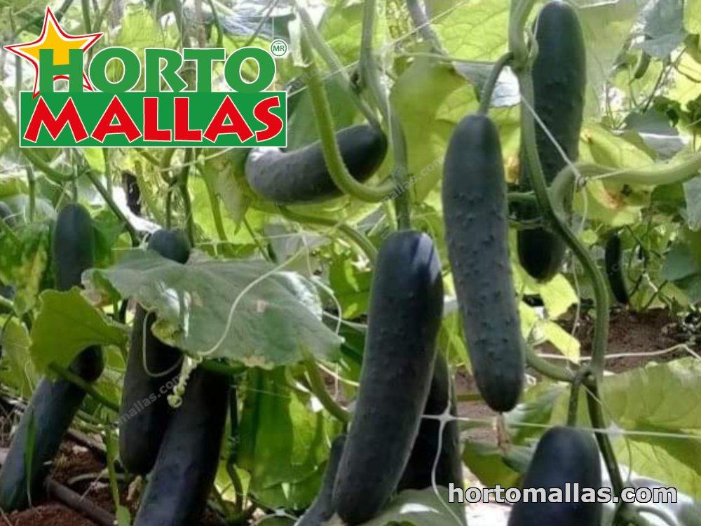 Training vegetable plants