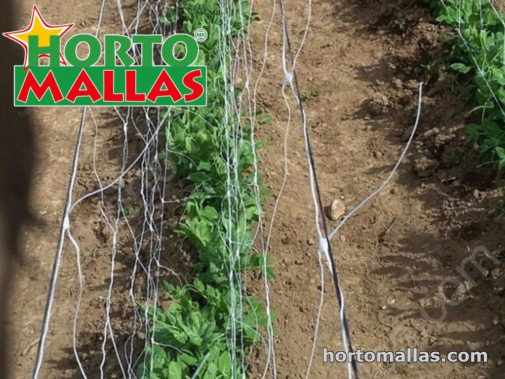 espalier support net used in cropfield