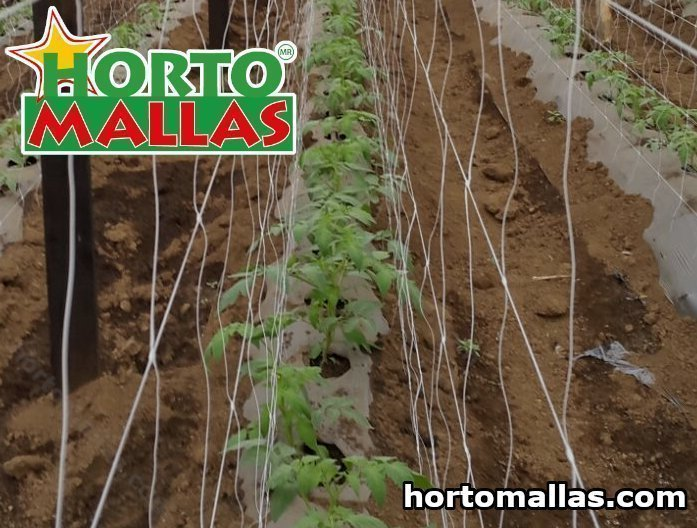 vertical support system with hortomallas