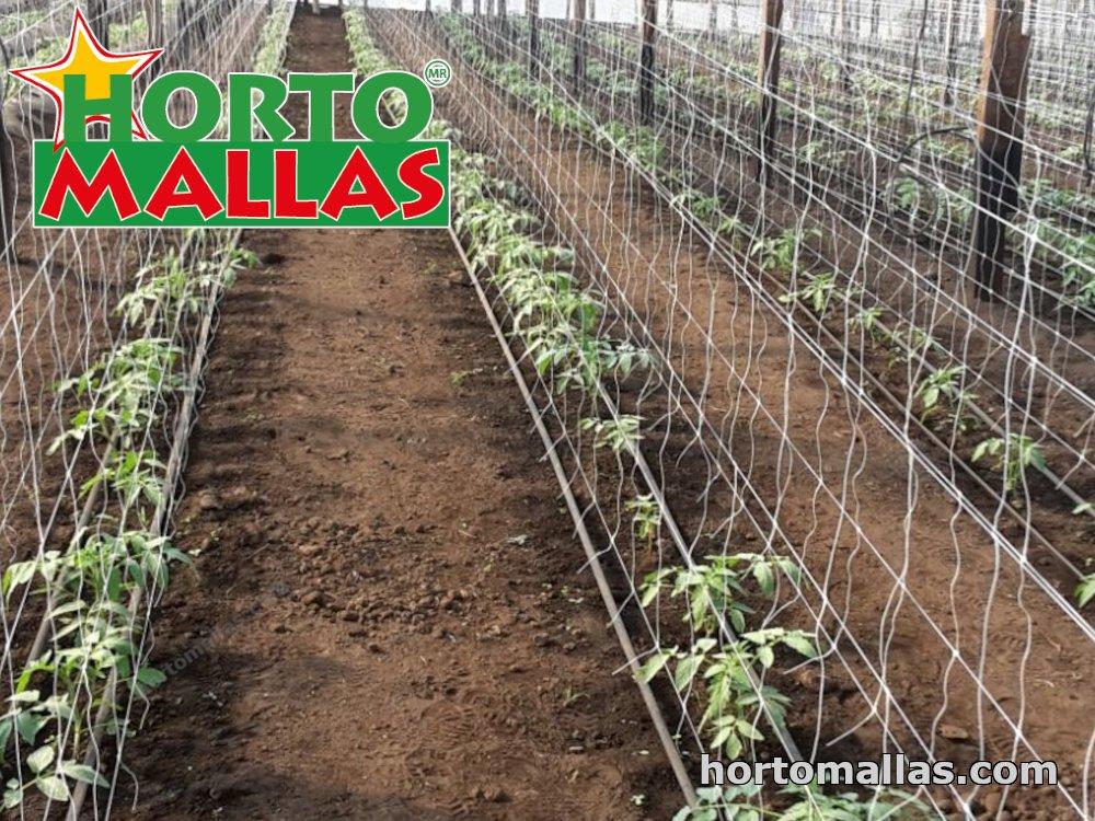 cropfield using espalier net for plant support
