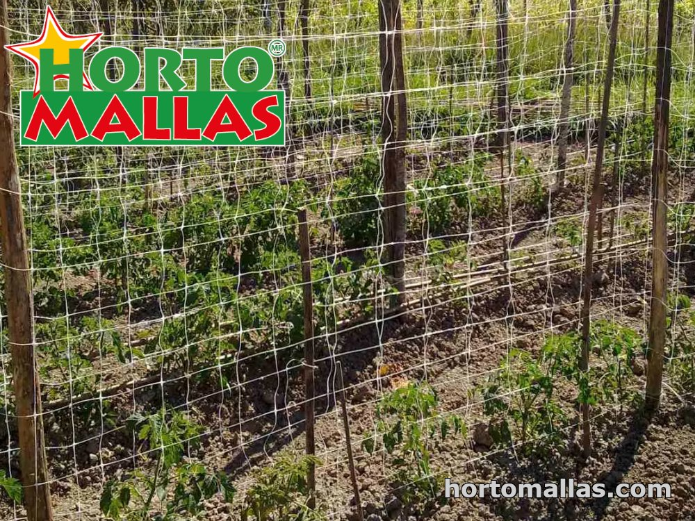 trellis for tomatoes works better on a double netting system