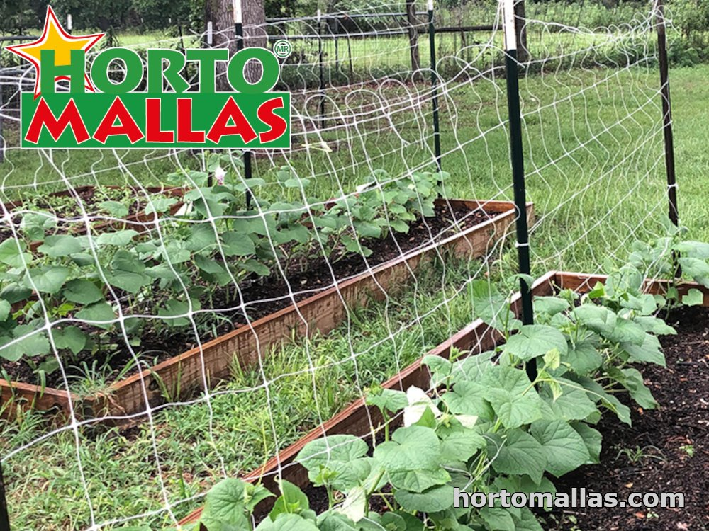 tomato trellis support before the plant grows