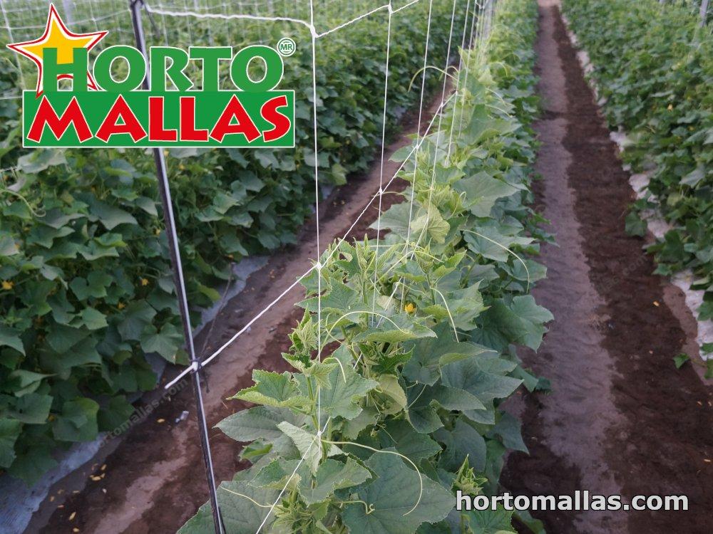 Tomato Support Netting