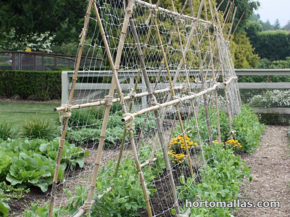 Bamboo vegetable trellis system