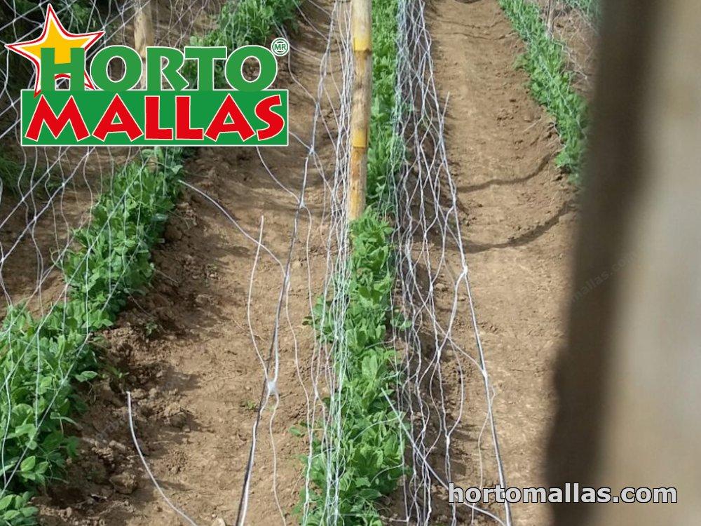 cropfield using espalier net