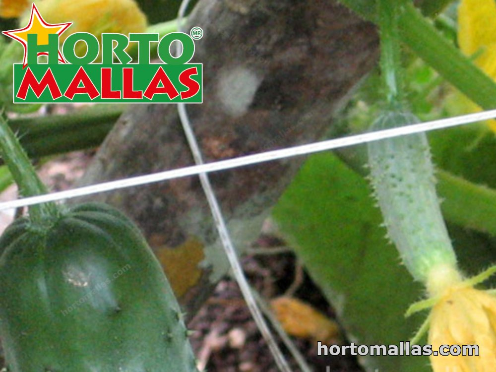 trellis mesh ruined by the weather