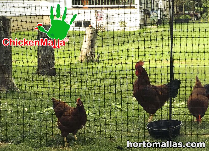 chicken net using for protect poultries