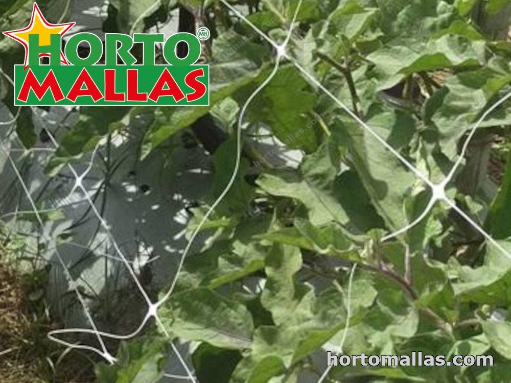 cropfield using hortomallas espalier net