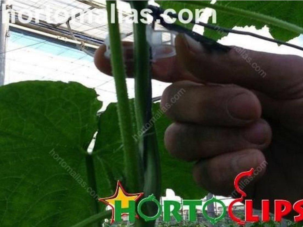 Tomato clips