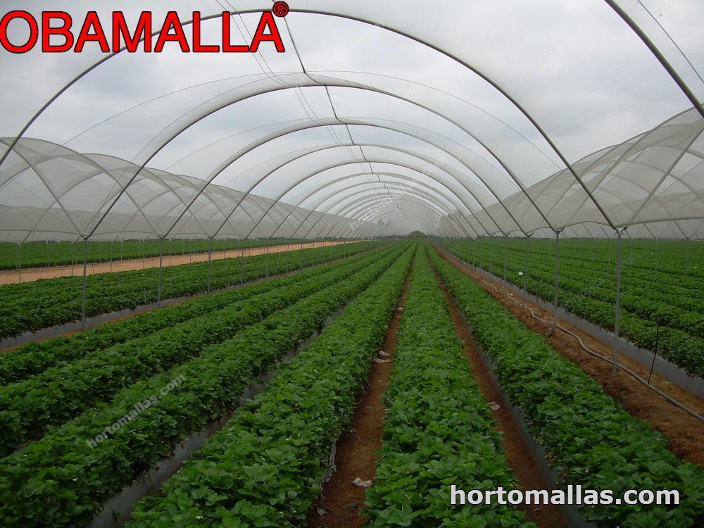 cropfield in greenhouse