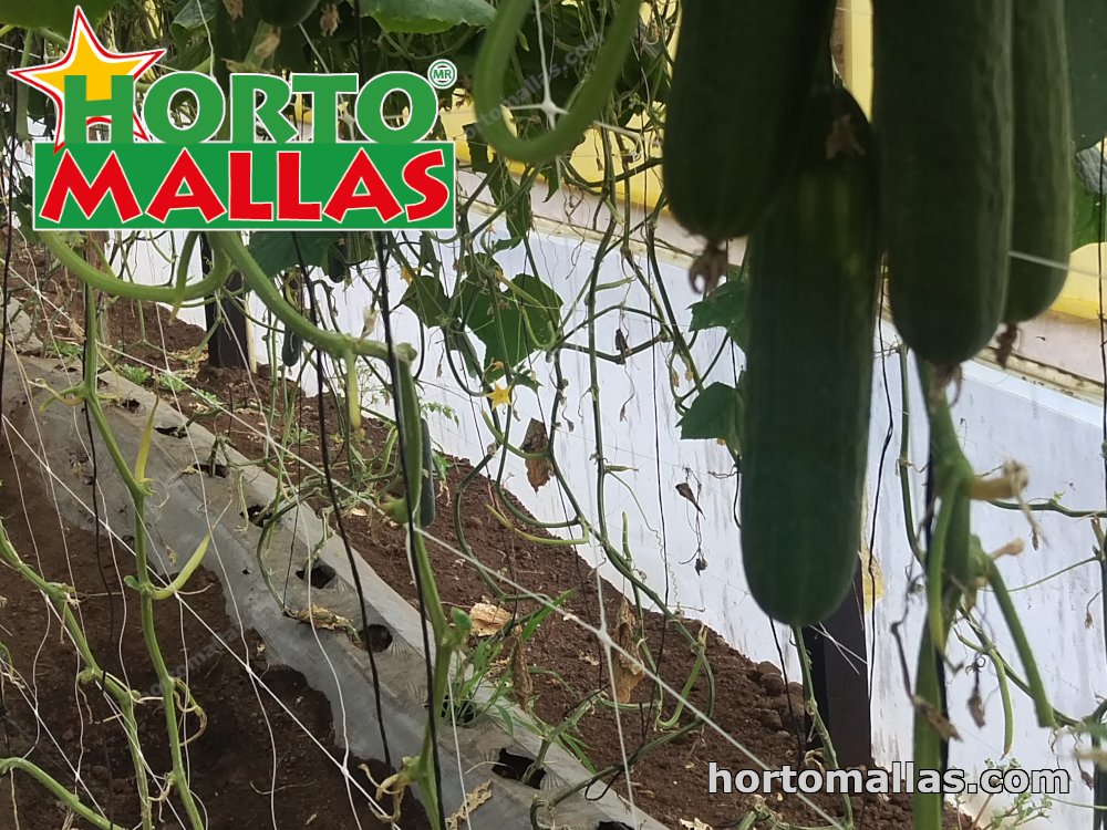 Plant net mesh with cucumbers