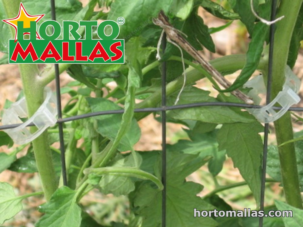clips used for support to tomato plants.