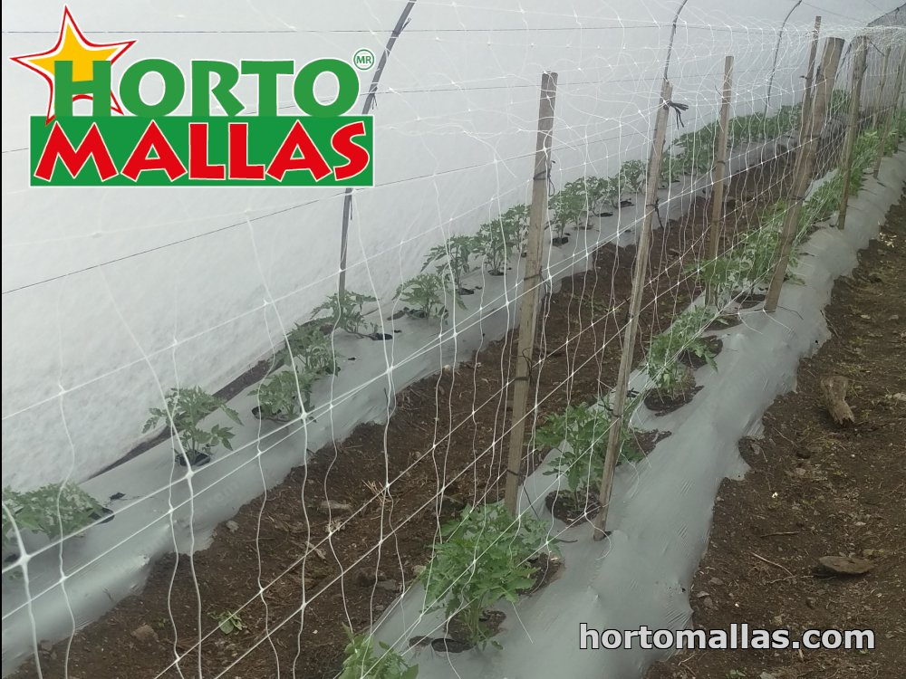 tomato support nettings