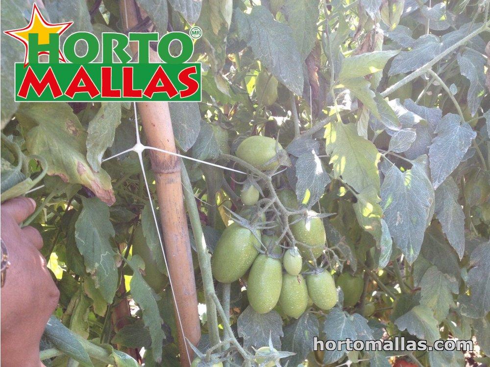 tomato trellises