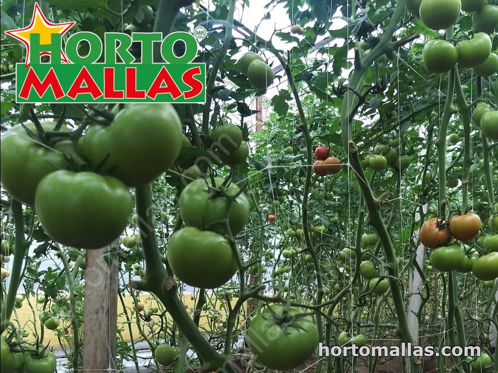 hortomallas net used for apply vertical support system