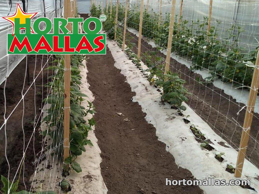 hydroponic greenhouse using trellis netting