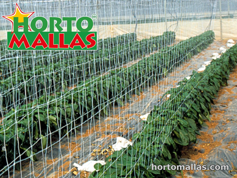 chili seeds with trellis net