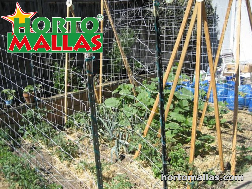 diagonal knotted netting as a trellis support