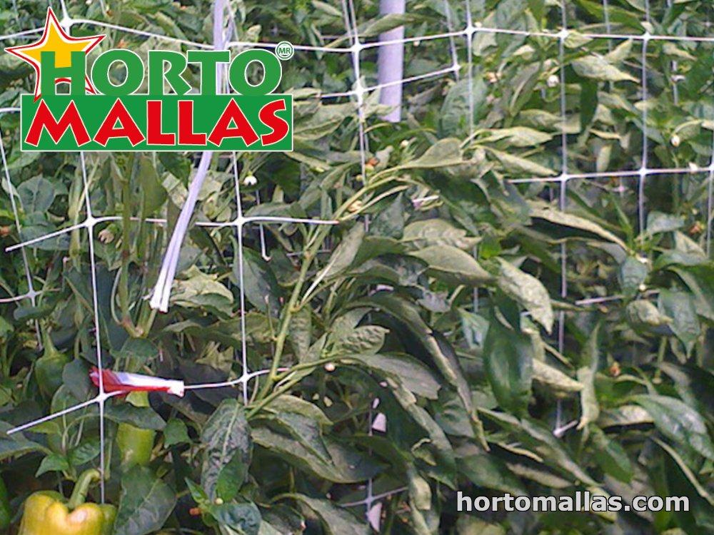 pepper plants with trellis net