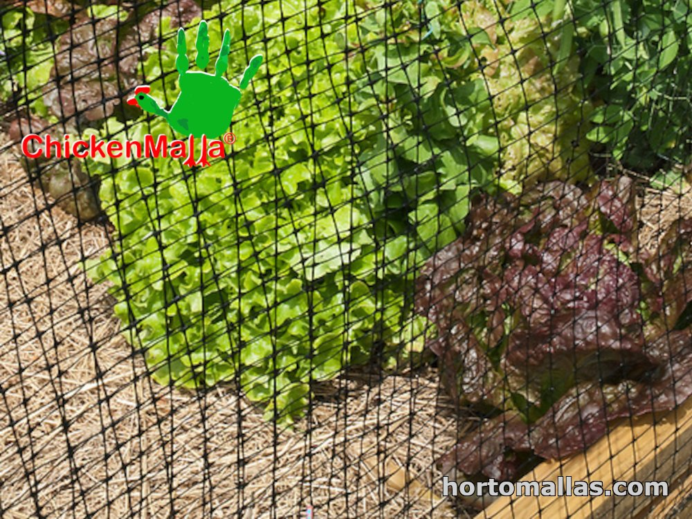 chicken net used for protect plants