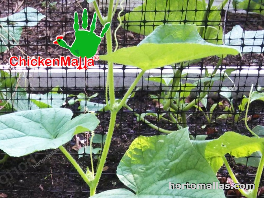 CHICKENMALLA® can also installed on small crops