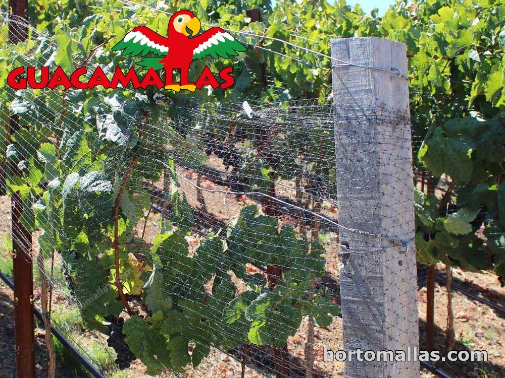 anti bird netting on trees