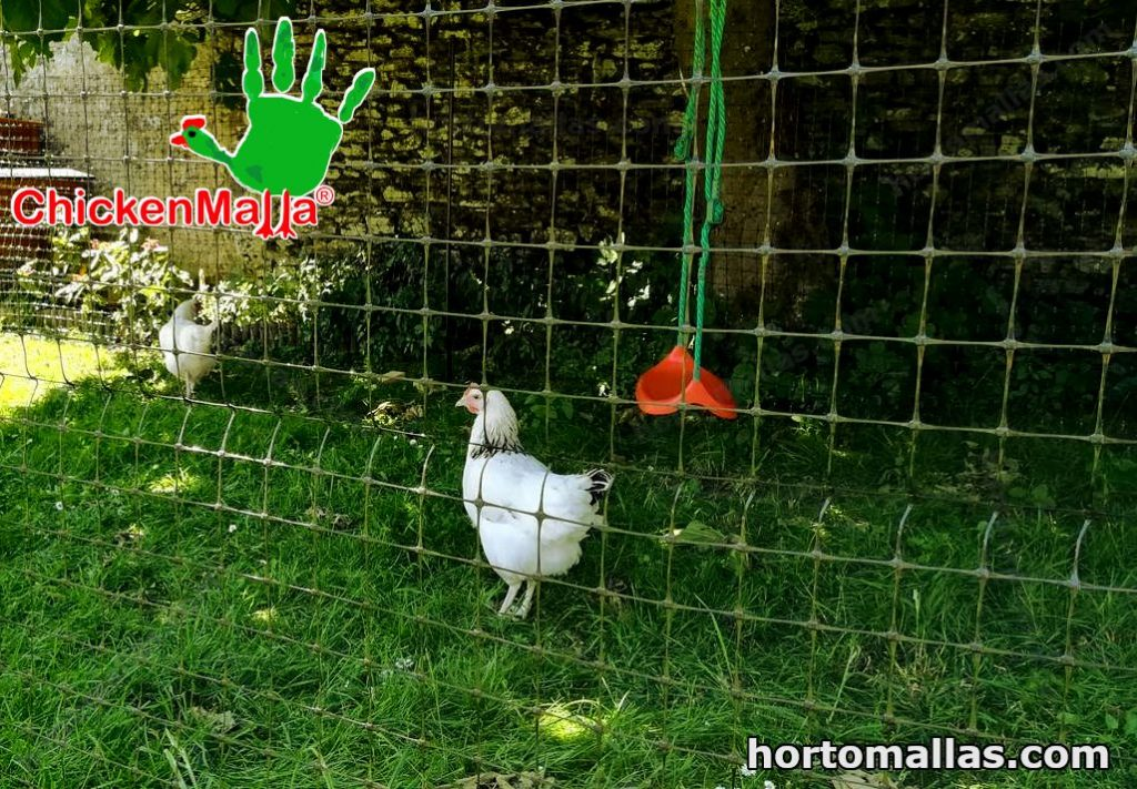 chicken coop build with wood and poultry netting