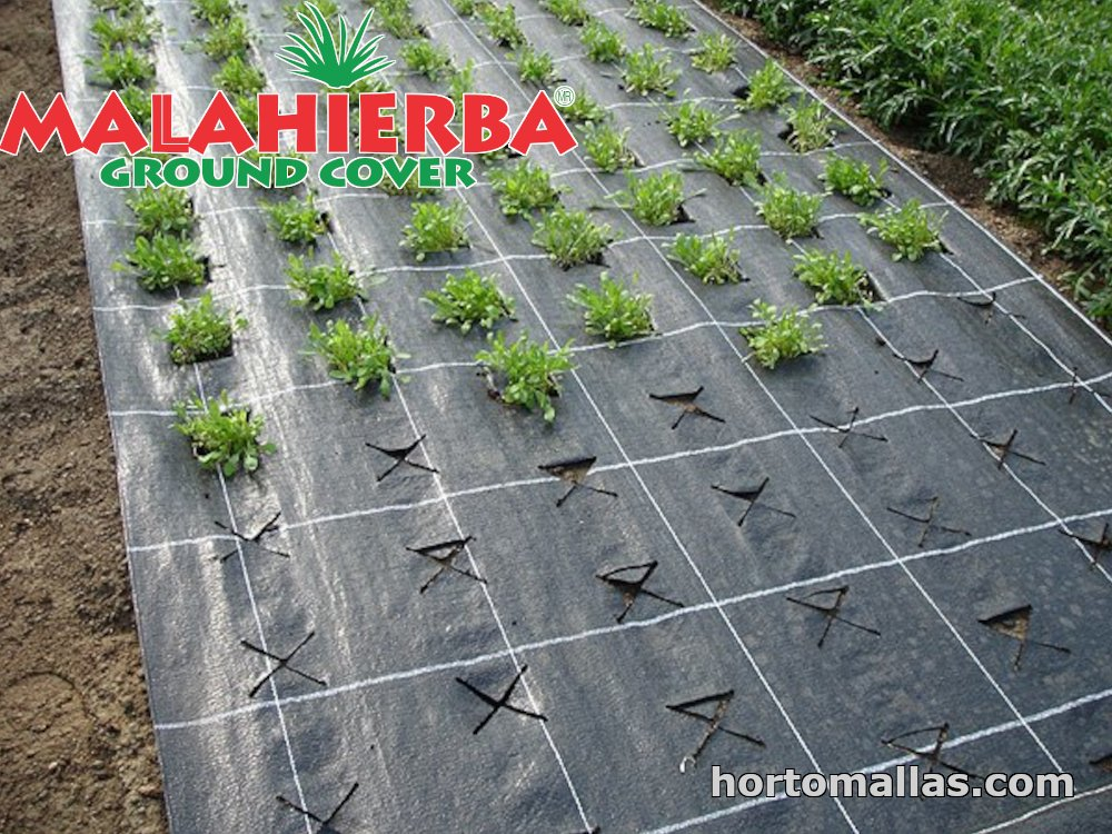 ground cover installed on garden for plants protection