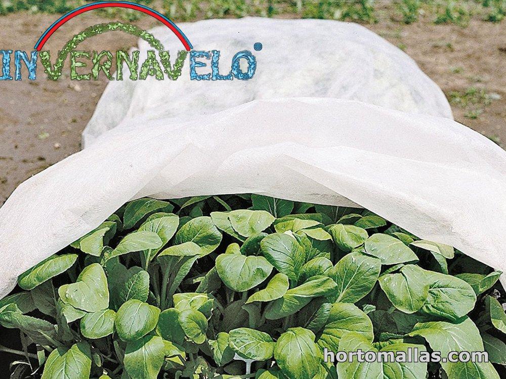 frost blanket in landscaping