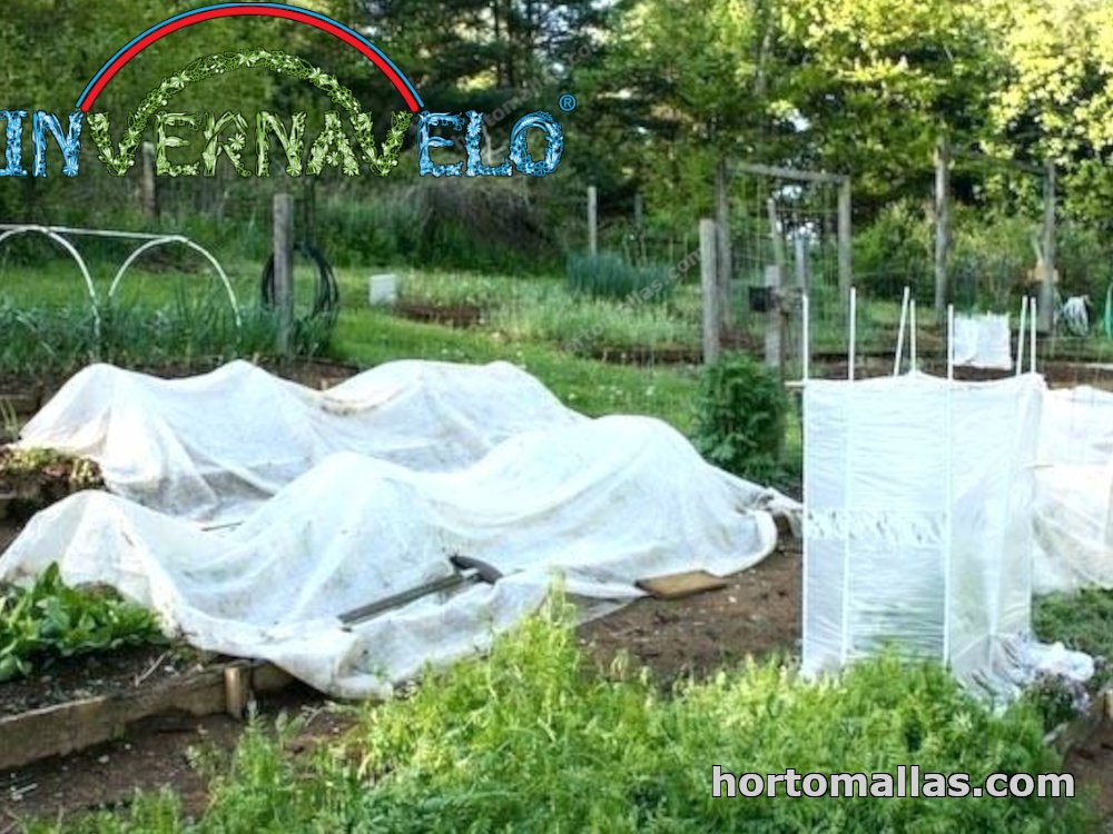 flower beds and thermal blanket