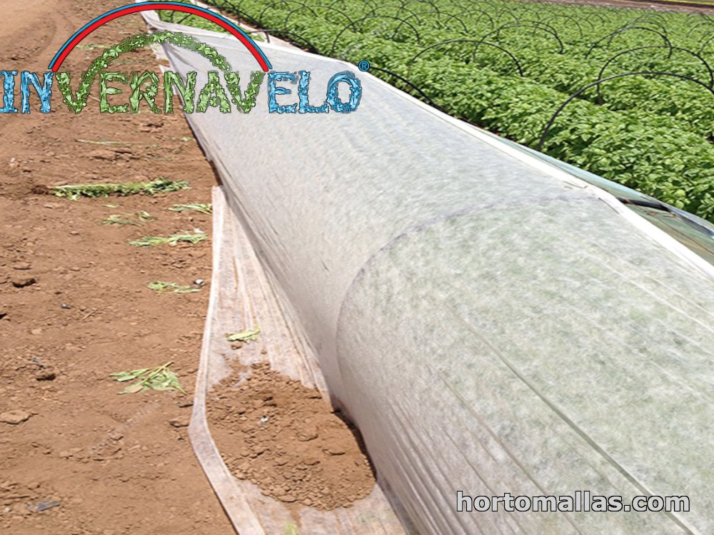 frost fabric used in garden