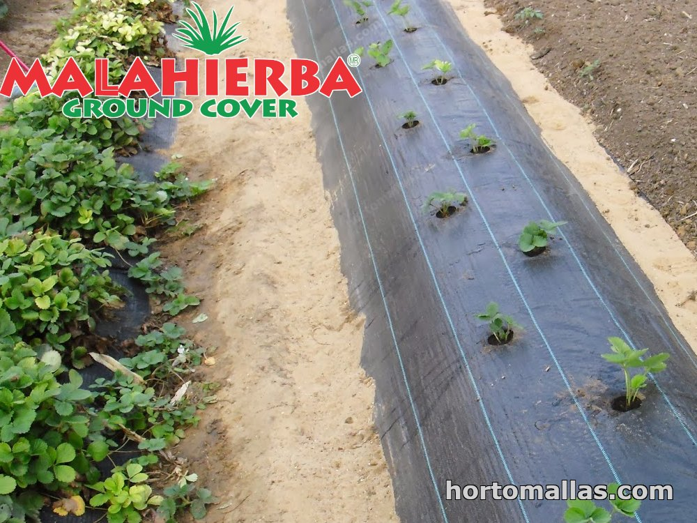 weed cloth protecting plants against weeds