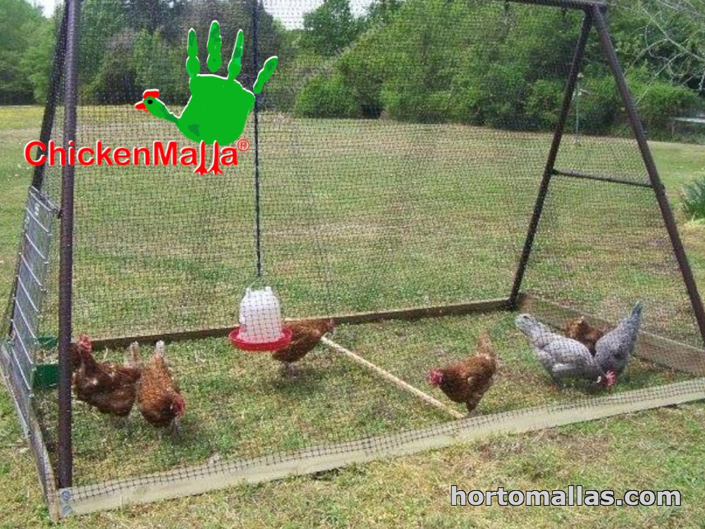 chicken corral with poultry mesh