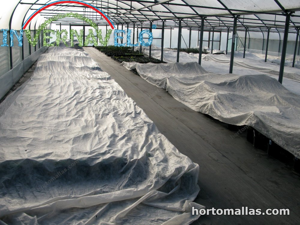 row covers inside a greenhouse in the winter