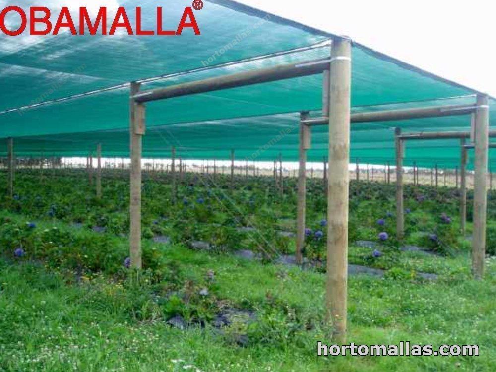 malla sombreadora  OBAMALLA® en cultivo de flores