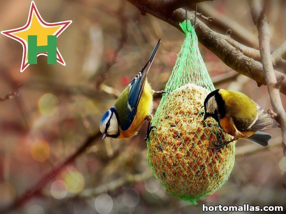 ¿Qué comen las aves?