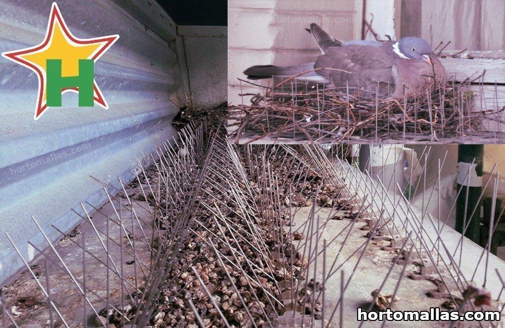 nido de palomas con cornisa cubierto de picos