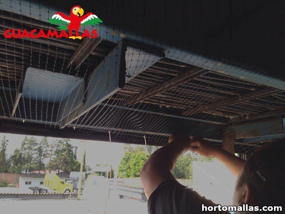 Aleja residentes no deseados con Control de aves todo el año