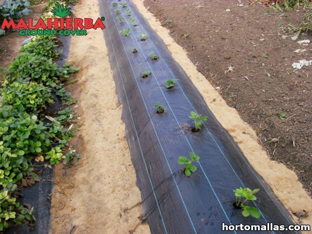 malla ground cover