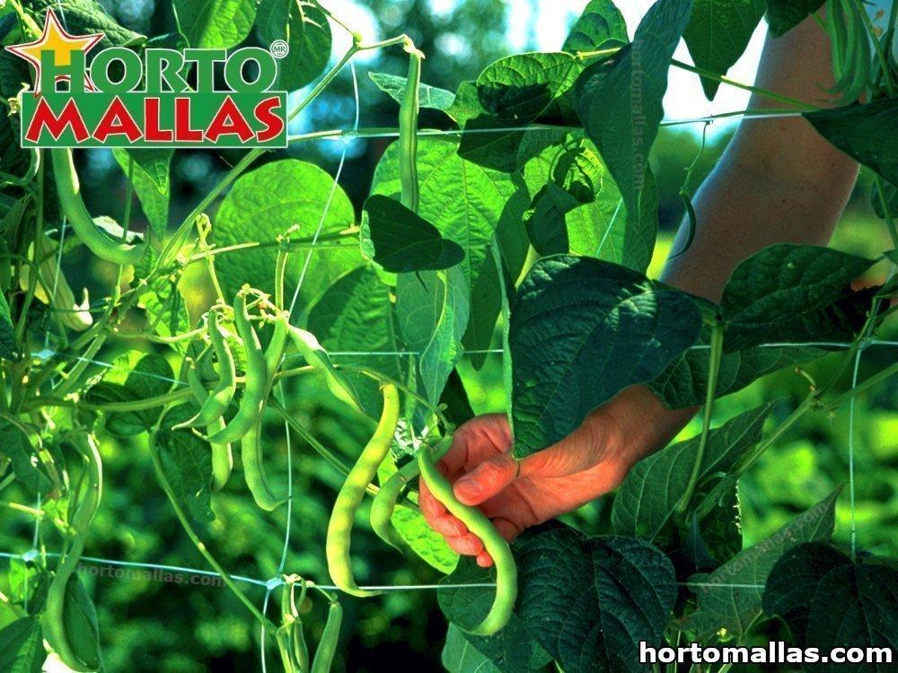 Entutorar Hortalizas, una necesidad para un cultivo Orgánico