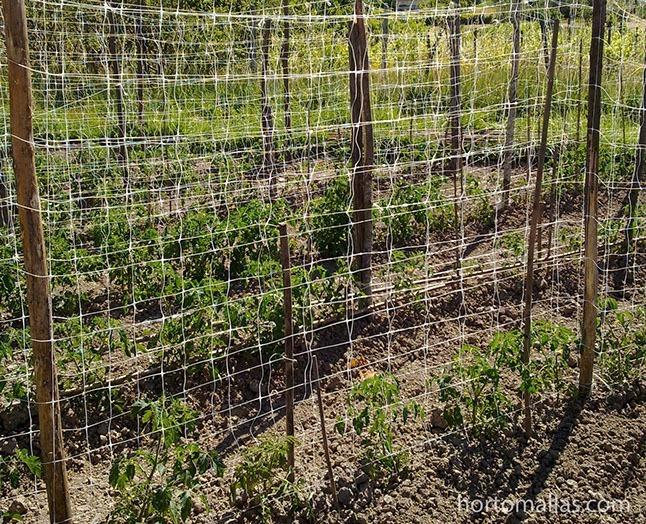Foto galeria de tomate rede de tutoramento hortomallas - Tutores para tomates ...