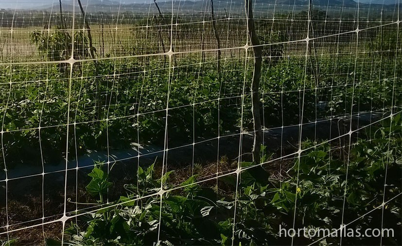 HORTOMALLAS vertical trellis is the easiest and fastes way to allow your cucumbers to grow and receive more light and air, decreasing pathogens.