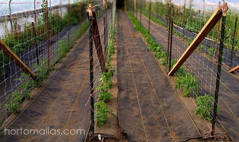 Malla espaldera HORTOMALLAS en cultivo de tomates