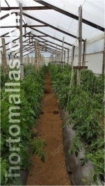 Invernadero de tomate con soporte HORTOMALLAS
